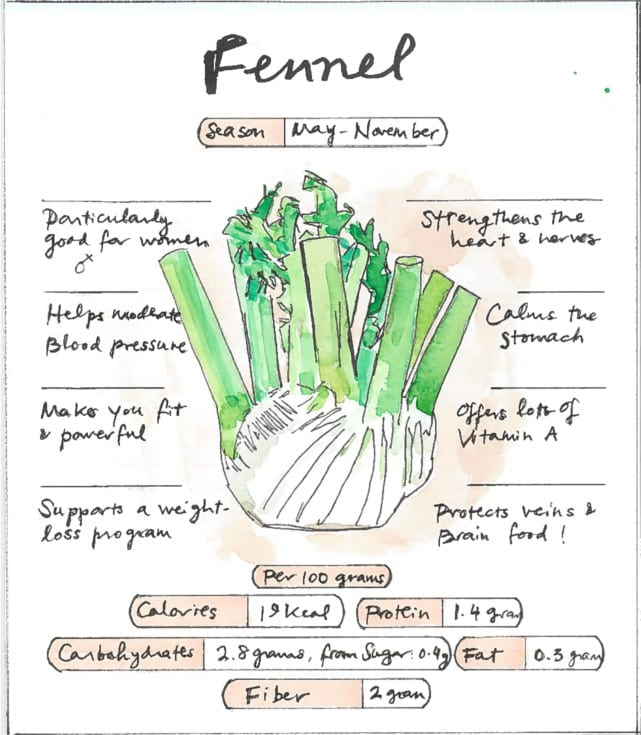 Infographic Fennel