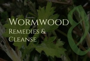 Wormwood Benefits