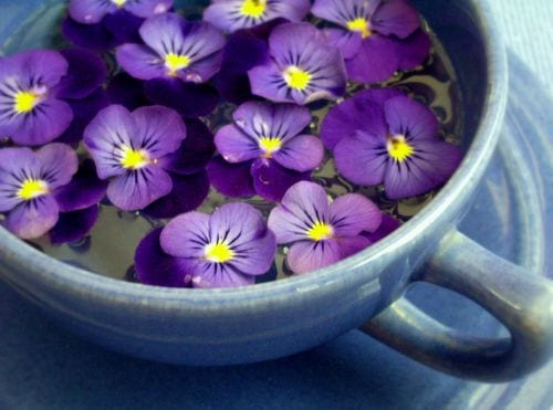 sweet violet