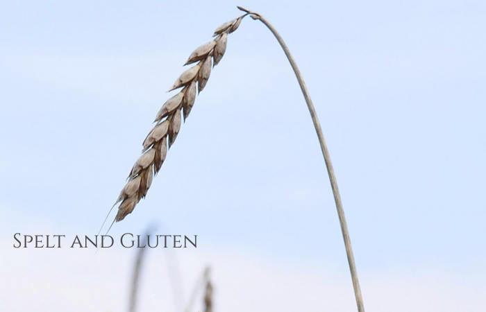 is spelt gluten free