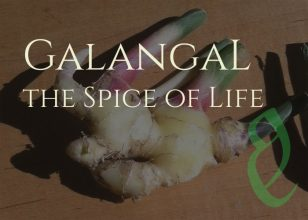 What is Galangal? Your Guide to the Spice of Life
