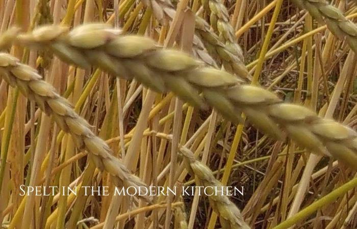 dinkel modern uses for ancient spelt healthy hildegard