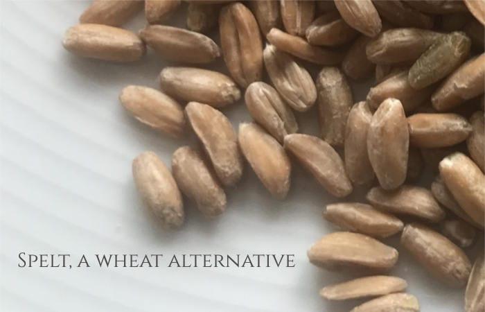 dinkel wheat