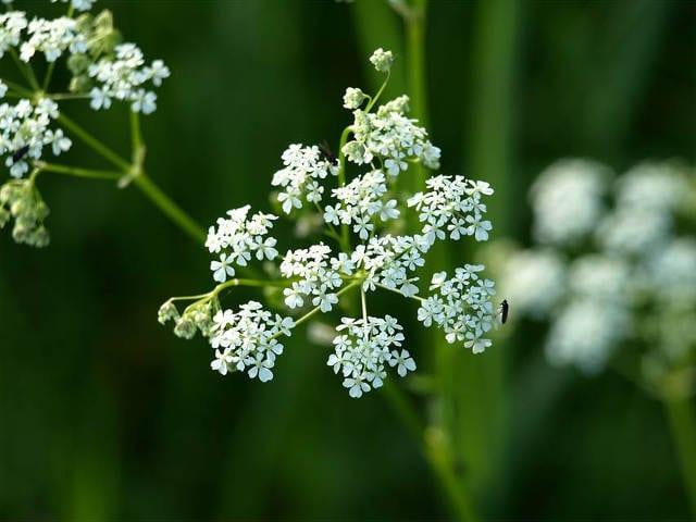 Gastritis Natural Remedies 4