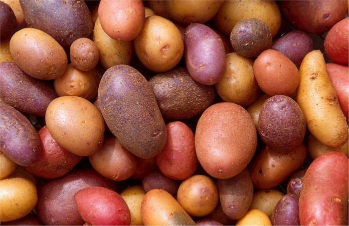 Potatoes - Healthy Hildegard