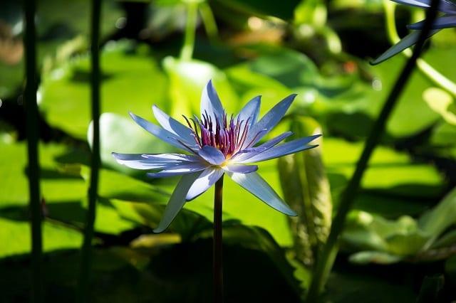 kundalini awakening process Lotus I