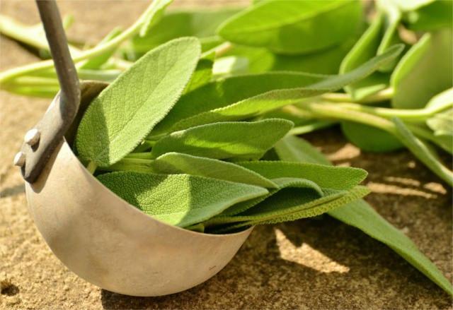 hildegards healing plants