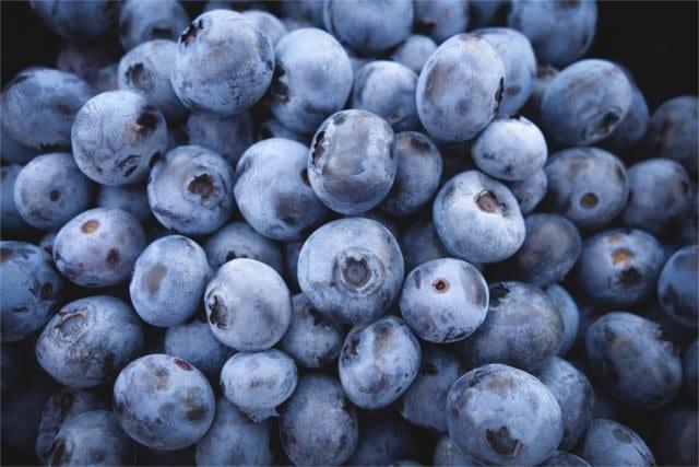 prebiotic foods blueberry