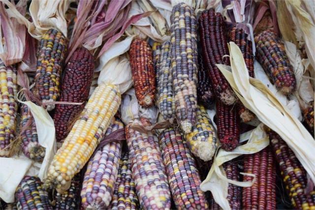prebiotic foods polenta fiber content