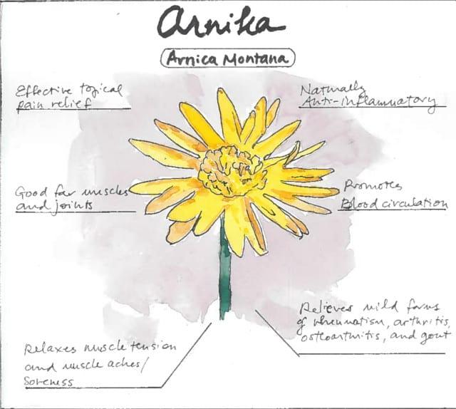 Arnica Montana Infographic