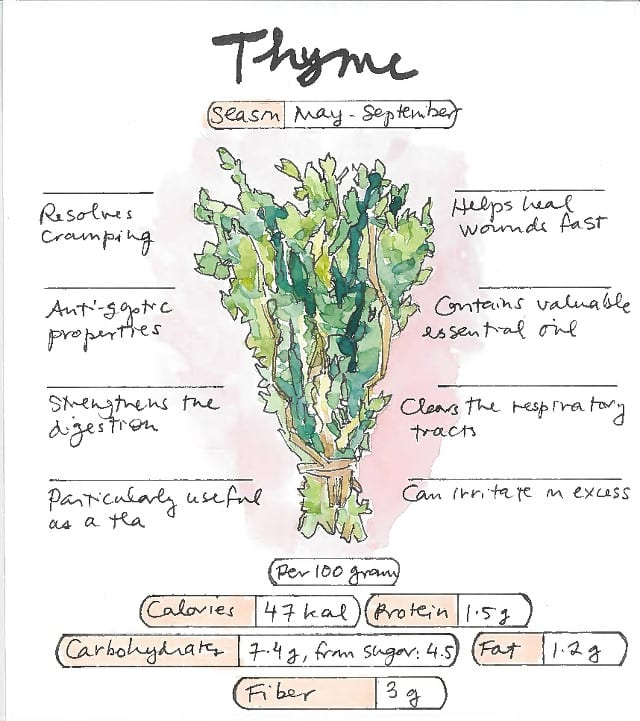 Infographic Thyme Health Benefits