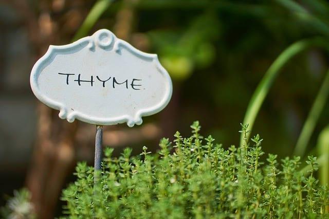 Thyme benefits