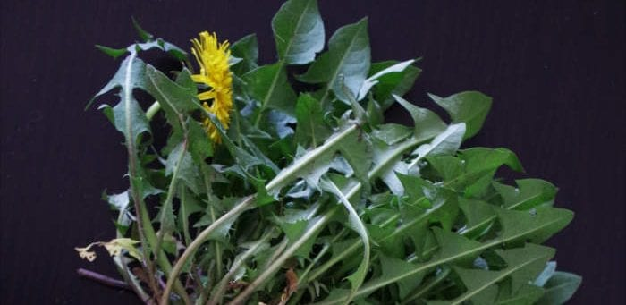 Dandelions, a souce of natural bitters - Healthy Hildegard