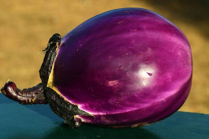 Eggplant bitter foods