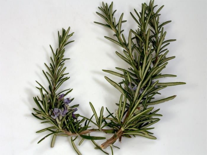 Bitter Spices Rosemary