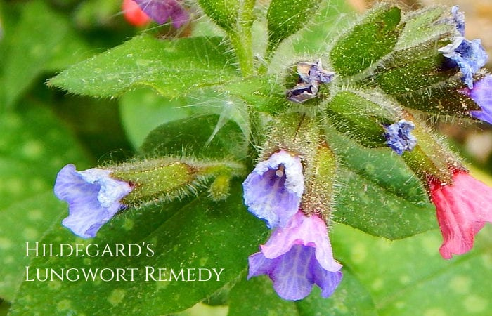 lungwort remedy