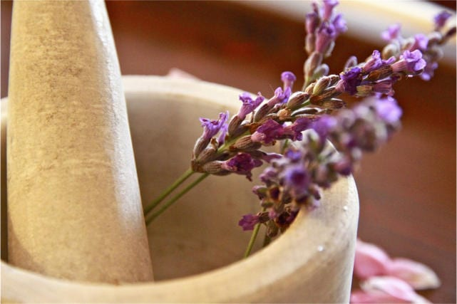 vervain herb natural remedy