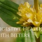 Digestive Health and Bitters: 6 Reasons You Should Use Bitters