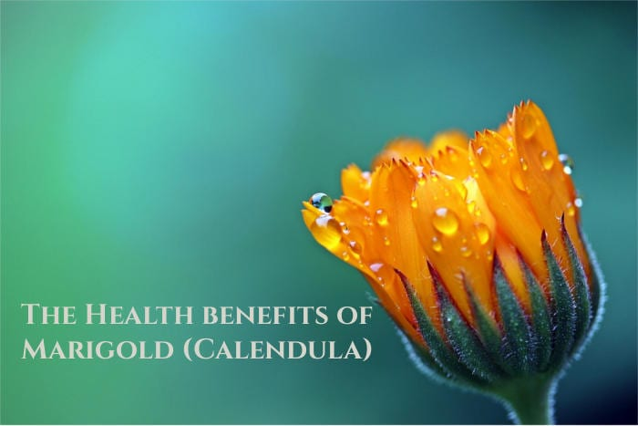 marigold calendula flower uses