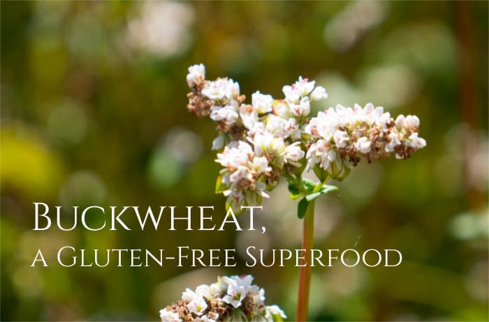 Health Benefits of Buckwheat 1