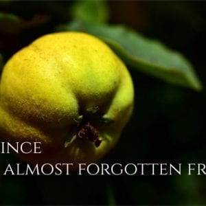 Quince, A Healthy and Almost Forgotten Fruit