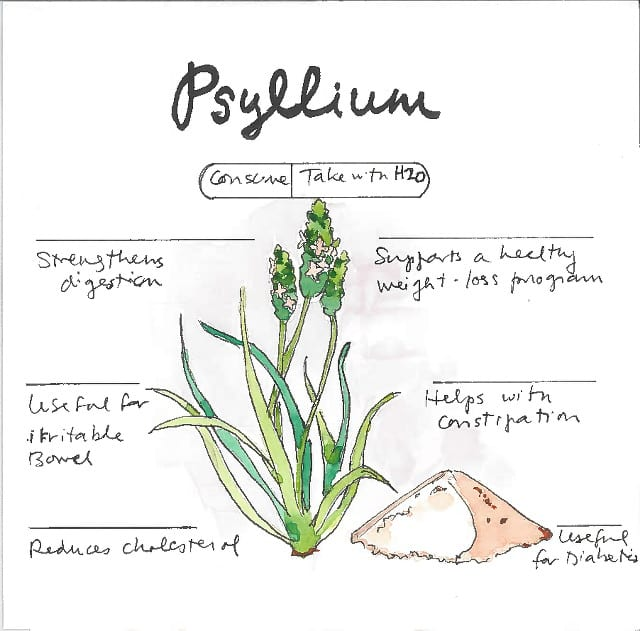 Infographic How to buy Psyllium Husk