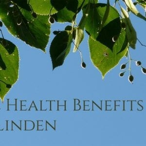 Linden tea benefits and the healing power of linden