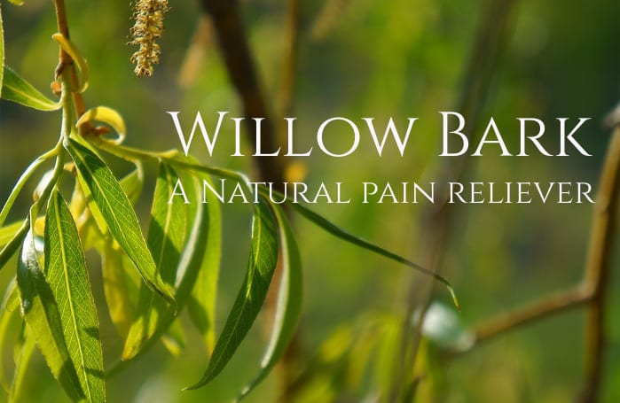 Willow Bark