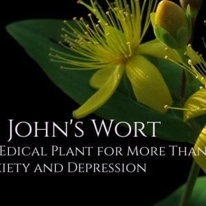 St. John's Wort Benefits: An Effective Medicinal Plant for Anxiety and Depression