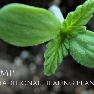 Hemp (seeds), a Culinary and Medicinal Plant According to Hildegard
