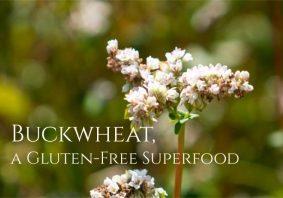Health Benefits of Buckwheat 1